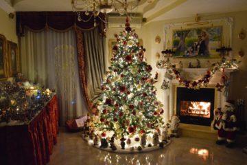 Come Nasce l'Albero di Natale – Storia