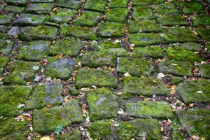 sfondo pavimento lemax 4